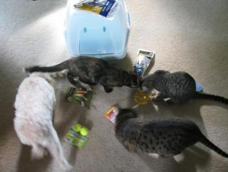 the girls unpacking the bags from Petsmart shopping spree&#3