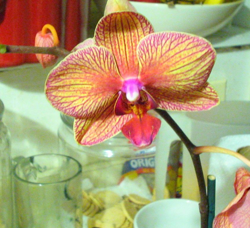 Mother`s day Orchid 2009