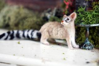Ring-tailed Cat by *REVE*