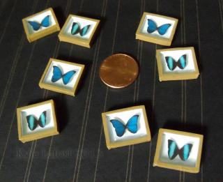 Miniature Riker Mounts - Morpho Butterfly Sets