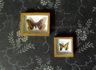 Miniature Riker Mounts - Moth and Butterfly