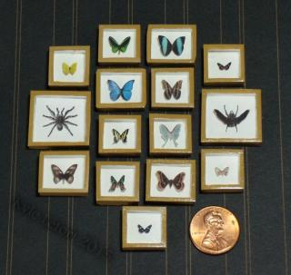 riker mounts butterfly displays large Set handmade By Kyle lefort