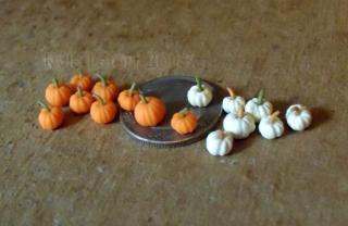 Micro Miniature Pumpkins Orange and White