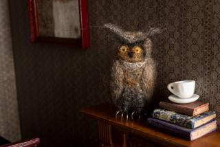 Great Horned Owl Taxidermy