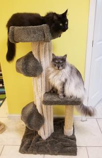 They are so happy that their cat tree arrvied!