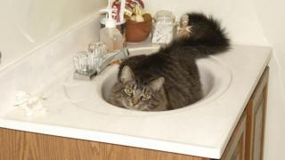 Giant Hairball in the sink