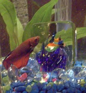 Kipper the fish with his mini-aquarium